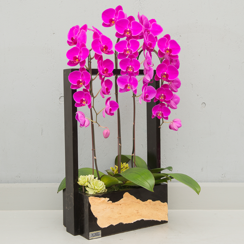 3 lavender orchid plants-lafleurbytracy.png
