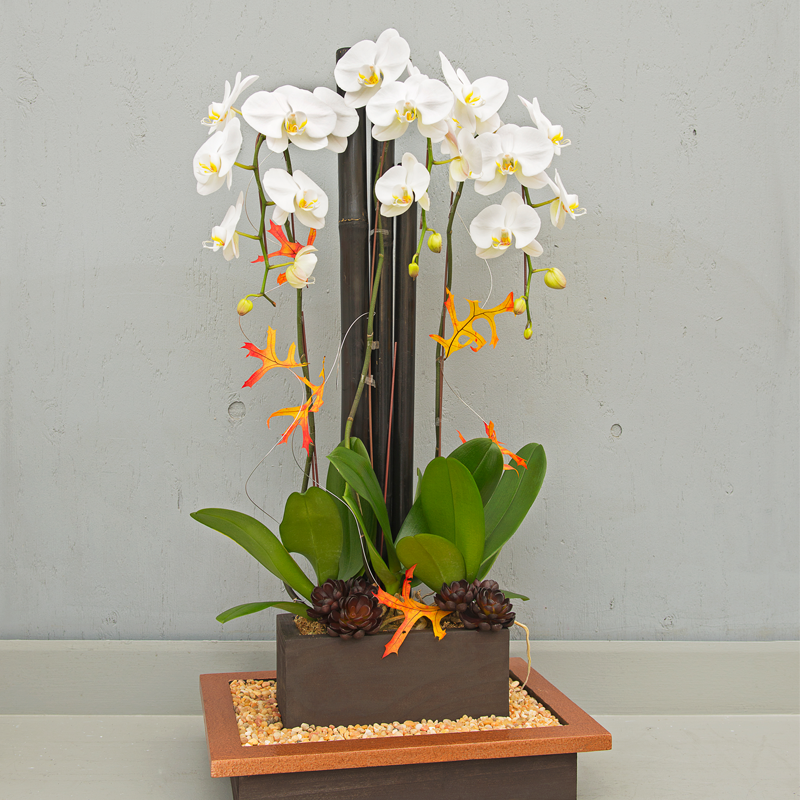 white phalaenopsis orchid plants-lafleurbytracy.png
