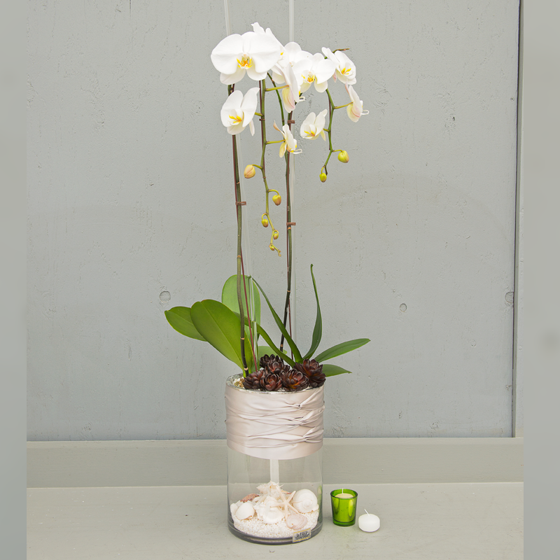 white phalaenopsis sea shell cylinder-lafleurbytracy.png
